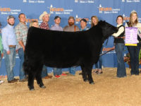 We Are proud to Donate the proceeds from our Lot 11 in tonight's Embryo Sale to the NJAS