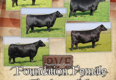 April 19 – Foundation Female Online Sale – CW Cattle Sales